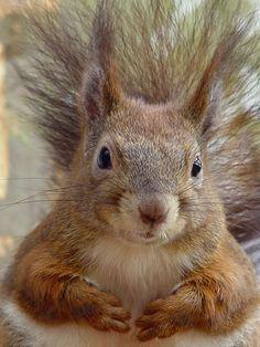 Eichhörnchen Bettina Dittmann www.pixelartistin.de