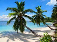 Aloita Resort and Spa on Simakakang Island of Mentawai Archipelago West Sumatra Paradise Island, Island Life, Aloita Resort, Travel Around The World, Around The Worlds, Gili Island, Surf Trip, Tropical Beaches, Fauna