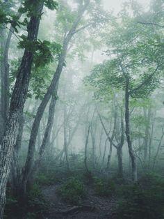 Jungle Images, Writing Photos, Forest Landscape, Midsummer Nights Dream, Photo Lighting, Closer To Nature, John Muir, Lights Background, Mists