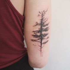 eastern white pine - jess chen tattoo