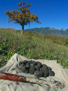 Tartufo, just picked black truffles, central Italy. Good on everything, pasta, meats, or just on bread and