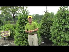 Landscaping Ideas - Plant Size Matters. In this video you'll learn how why the size plant you choose can improve your landscape design. Landscaping ideas & tips from Sollecito Landscaping Nursery, a Syracuse, NY landscaping nursery. To get advice from a Senior NYS Certified Landscaping Professional on how you can design & create sustainable and affordable landscapes visit sollecito.com. #syracuse #syracuse_NY #LandscapingDesign #BackyardLandscapeDesign #gardening