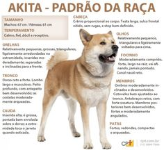 Siga Rafa Vet cat recipes monty the cat cats things cat base awesome cats cat and dog Akita Puppies, Akita Dog, Dogs And Puppies, Bull Terriers, Animals And Pets, Funny Animals, Pet Dogs, Dog Cat, Pet Paradise