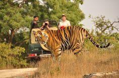 Jeep Safari in Bandhavgarh