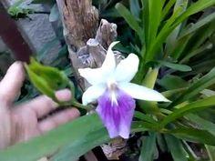 Youtube, Urban Gardening, Organic Fertilizer, Crafts For Children, Garden, Succulents, Plants, Flowers, Pastor