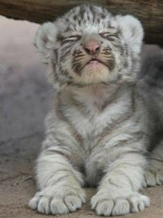 Zoo Animals – Cute Animals – Funny Animals – An Amazing Zoo Trip, Cute Baby Animals, Animals And Pets, Funny Animals, Baby Wild Animals, Funniest Animals, Zoo Animals, Beautiful Cats, Animals Beautiful, Tier Fotos