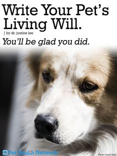 Write Your Pet's Living Will. You'll be glad you did. By Dr. Justine Lee