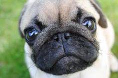 Mad littel puppy