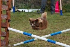 面白い犬の写真