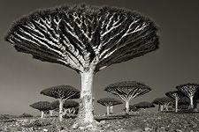 (BM-073) - Beth Moon: Diksom Forest