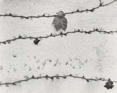 "Ivy on Wall  Wynn Bullock (American, 1902-1975)    1956. Gelatin silver print, 7 9/16 x 9 9/16"" (19.2 x 24.3 cm). Gift of David H. McAlpin. © 2011 Estate of Wynn Bullock  1754.1968"