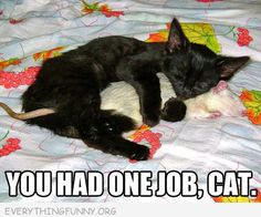 funny caption cat hugging rat you had one job cat