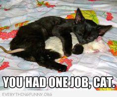 funny caption cat hugging rat you had one job cat