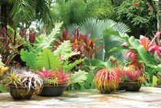 Beginner's Guide To Tropical Landscaping Design Plans – My Best Rock Landscaping Ideas Tropical Garden Design, Tropical Backyard, Tropical Landscaping, Landscaping With Rocks, Tropical Plants, Tropical Flowers, Backyard Landscaping, Tropical Gardens, Landscaping Ideas
