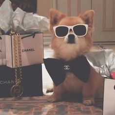 "He's in love with the Coco. | The ""Rich Dogs Of Instagram"" Are Bigger Ballers Than You"