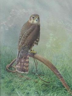 """Merlin On A Bow Perch"" -Falconry Original Art by R. David Digby - Original Art…"