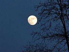 'Baum mit Mond' von Linda Schilling bei artflakes.com als Poster oder Kunstdruck $16.63