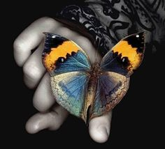 Rainbow Butterfly,Animated - Butterflies Photo (7697834) - Fanpop