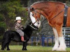 Znalezione obrazy dla zapytania draft horse