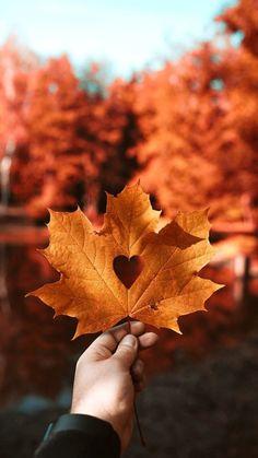Fall Halloween, Halloween Costumes, Sheet Ghost, Autumn Scenery, Autumn Aesthetic, Fall Photos, Happy Fall, Fall Season, Fan Art