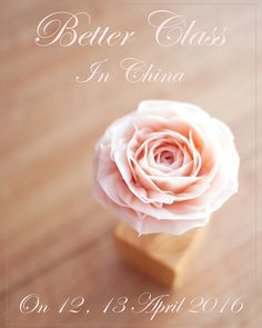 . Finally, BETTER CLASS will be opened in Apr. in China !! Don't miss last chance  We have limited seats left ! . If u have any inquiries about this class,  plz send us email ! 88610518@qq.com bettercakes@naver.com  www.better-cakes.com #buttercream#cake#베이킹#baking#rose#like#버터크림케이크#베러케익#flowercake#flower#수제케익#sweet#플라워케이크클래스#foodporn#koreaflower#디저트#bettercake#dessert#버터크림플라워컵케익#follow#food#koreancake#beautiful#flowerstagram#instacake#China#꽃스타그램#베이킹클래스#instafood#