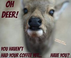 Need Coffee, Coffee Is Life, Coffee Time, Coffee Cups, Coffee Quotes Funny, Coffee Humor, Coffee Pictures, Oh Deer, Good Morning