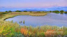 Lavender Twilight at Whitewater Draw - McNeal, Arizona