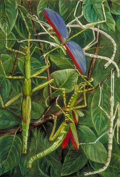 Marianne North Stick Insects - not just plants and views but bugs too.... Vintage Botanical Prints, Botanical Art, Botanical Illustration, Botanical Gardens, Marianne North, Victorian Paintings, Political Art, Landscape Art, Landscape Paintings
