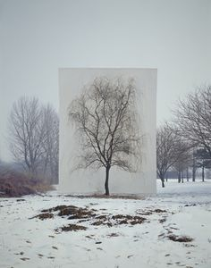 Tree #3 (series: photography-act) / 2007  / Myoung Ho Lee