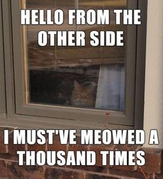 18 Funny Animal Pics for Your Tuesday
