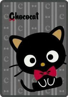Choco cat.Y.L.A