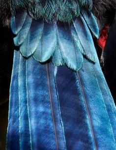 羽鸟抽象-02 - 绿盒