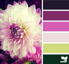 flora palette - design seeds