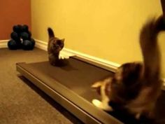 SERIOUSLY LAUGHED SO HARD I CRIED!!! Cats on the Treadmill.