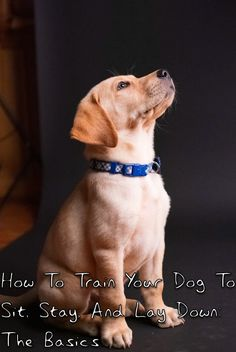 It can be hard to know how to train your dog to sit, stay, and lay down the right way. Here's how to teach the basic commands. New Puppy, Puppy Love, All About Puppies, Adoption Party, Puppy Chow, How To Train Your, Dog Behavior, Dog Training Tips, Dog Owners
