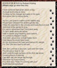 My Dog, My friend, My therapist.... on Pinterest | Great Danes, Irish ...