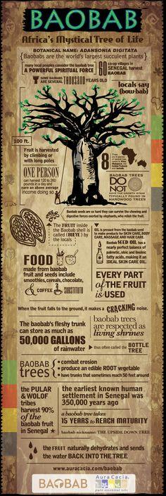 Awesome promo @Aura Cacia on the Baobab oil [Adansonia digitata].  #skincare