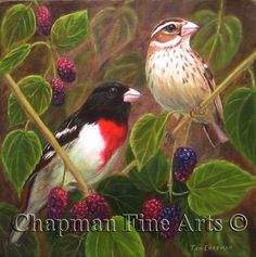 "Rose Breasted Gross Beaks in a Mulberry Tree, 8 x 8"" oil prints available @ chapman-arts.com"