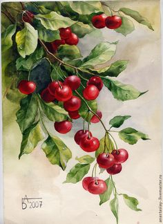 Купить Ветка вишни - ярко-красный, вишня, лето, акварель, акварельная картина…