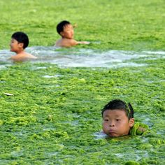 Green algae covers beaches and the sea in Qingdao, China