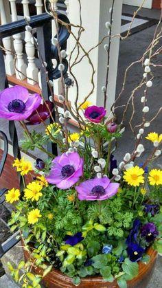 blumendeko topfpflanzen ideen gartenideen