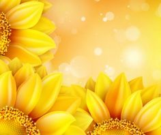 Sunflower flower with bokeh vector background 15
