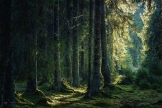 Fairy-tale mood in the forests from the Western Carpathian Mountains, Romania.