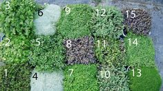 Spread a little love around with native groundcovers.