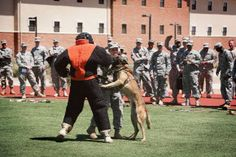 305th MI BN Hosts Resiliency Rodeo for Busy Soldiers