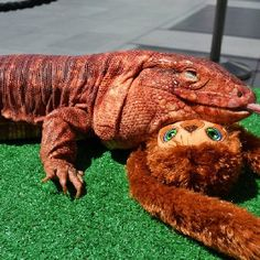Red Tegu and friend
