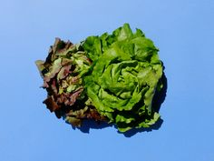 Bio Box – das Abo mit frischem Bio Gemüse - Mahler & Co - Feine Biowaren Neutral, Post, Cabbage, Vegetables, Organic Vegetables, Swiss Guard, Fresh, Cabbages, Vegetable Recipes