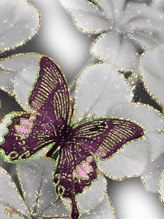 Бабочка на белых цветах.
