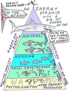 Photosynthesis, energy pyramids, phytoplankton and food chains supplied by energy from photosynthesis in nature - from FT Exploring- Repinned by Chesapeake College Adult Ed. We offer free classes on the Eastern Shore of MD to help you earn your GED - H.S. Diploma or Learn English (ESL) . For GED classes contact Danielle Thomas 410-829-6043 dthomas@chesapeke.edu For ESL classes contact Karen Luceti - 410-443-1163 Kluceti@chesapeake.edu . www.chesapeake.edu