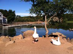 Howarth Park, Santa Rosa, CA